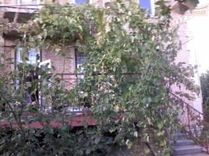 Дом, Царское село, 6-комн., 380 кв. м., Братьев Стыцьковских, Одесса, Киевский район